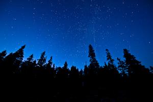 Trees & Stars