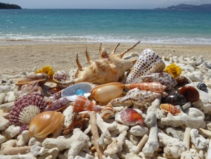 Beach combing in Okinawa Japan for seashells and sea glass