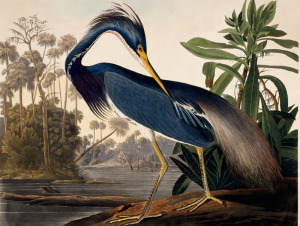 AMERICAN MASTERS - John James Audubon: Drawn From Nature