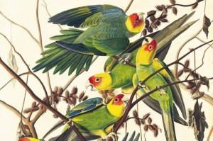 Audubon6