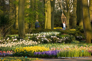 People walking among flowers in Keukenhof gardens, Lisse, Holland