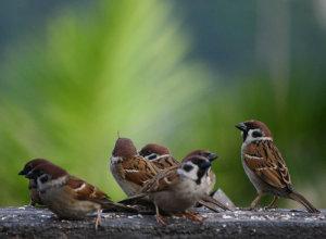 aRubinbirds