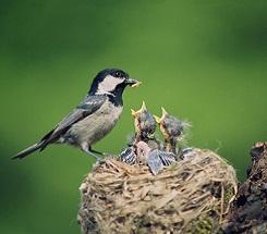 aWhitebirds