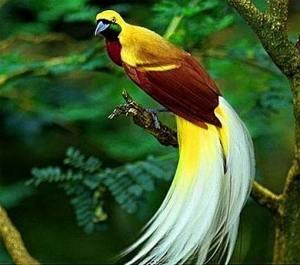 aBerrybird