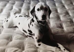 aDurrelldog