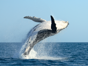 aOliverwhale