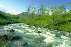 River Flowing in Spring